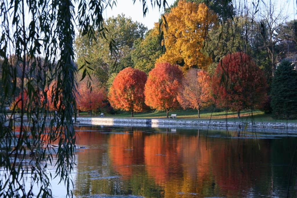 Small Lake During Autumn
